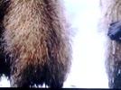Pluszowe Niedźwiadki - wyk. Dobrusia60 & DJ' Darek